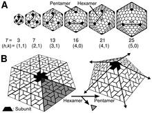 ساختارهای ایکوساهدرال (بیست وجهی) ویروسی