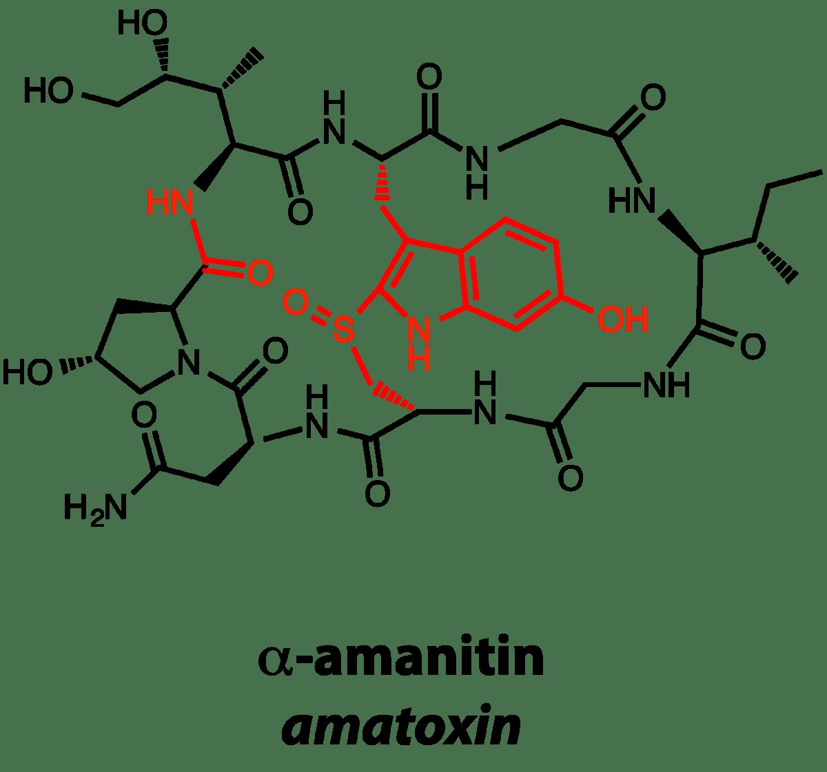 Ribosomally synthesized and post-translationally modified