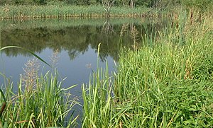 English: A temperate wetland, my photo release...