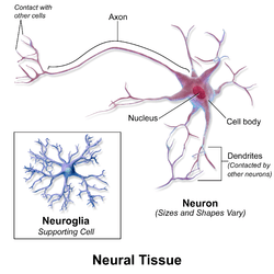 labelled diagram of nerve cell pioneer dxt2369ub wiring nervous tissue wikipedia
