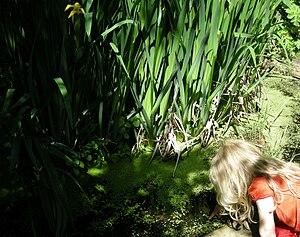 Wildlife pond for children, at Bracken Hall Co...