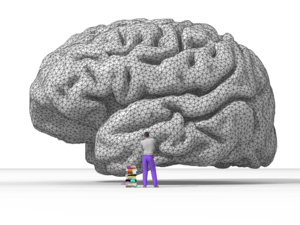 Rendering of human brain.