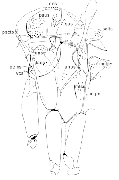 File:Parasite170028-fig11 Illustrated guide of
