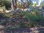 Ruth Bancroft Garden, Walnut Creek, California2.jpg