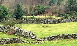 English: Drystone walls near Bryansford Drysto...