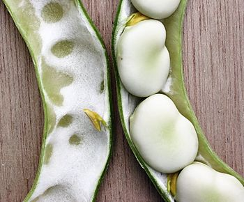 English: Vica faba or broad beans, known in th...