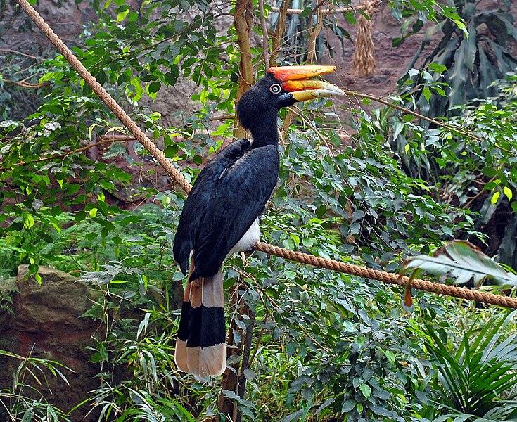 ITU LA PASAL Unique And Rare Animals In Malaysia