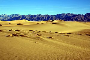 Sand dunes in Death Valley National Park. The ...