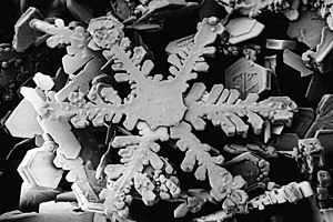 Snowflake magnified usda