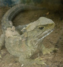 science diagram of lizard [ 1200 x 900 Pixel ]