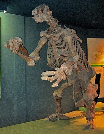 Ground Sloth (Eremotherium) fossil at the Nati...