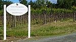 Quarryhill Botanical Garden Vineyard, Glen Ellen, CA.jpg