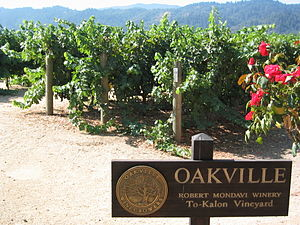 To-Kalon vinyard at the Robert Mondavi winery