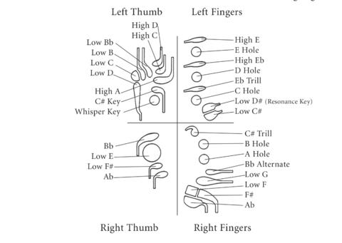 lip anatomy diagram true t 23f 2 wiring bassoon - wikipedia