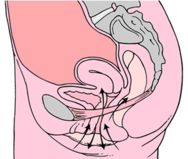 Kegel Exercises Diagram Png