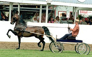 Morgan horse at New England Horse Show
