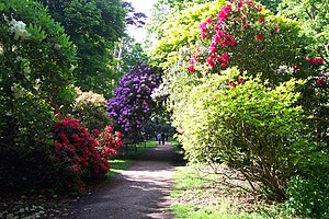 The Rhododendron gardens at Sheringham Park, i...