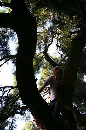 Person (user:merzperson0 climbing a tree.