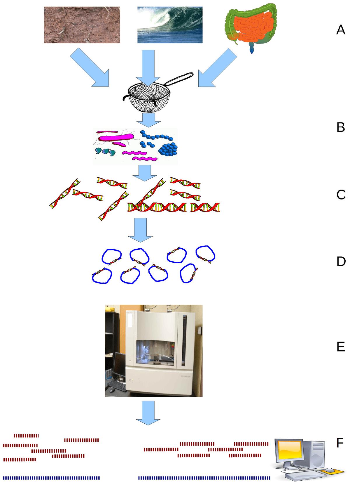 Viral Metagenomics Wikipedia