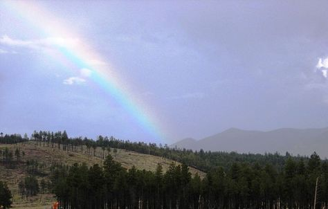 English: Kaibab National Forest near Flagstaff...