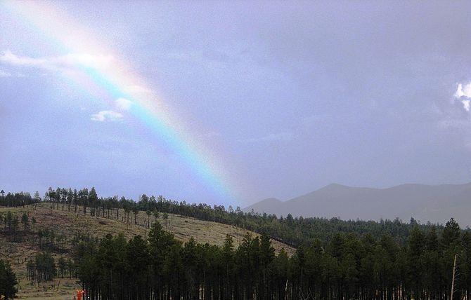 English: Kaibab National Forest near Flagstaff...