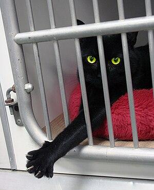 English: Animal Rescue