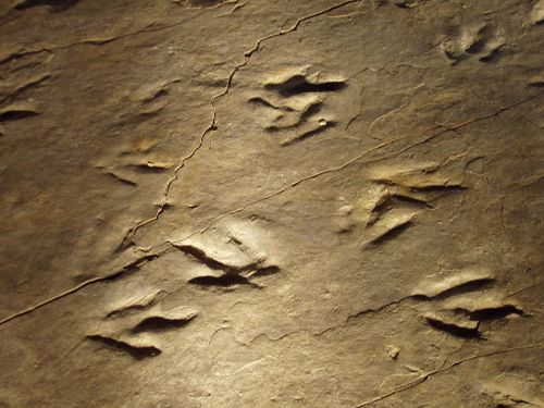 File:Dinosaur State Park (Rocky Hill, CT) - close-up.JPG