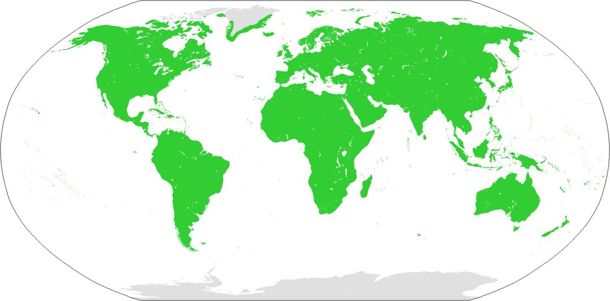 إنسان ويكيبيديا