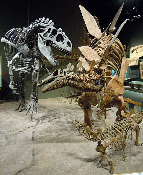 File:Allosaurus attacks Stegosaurus.jpg