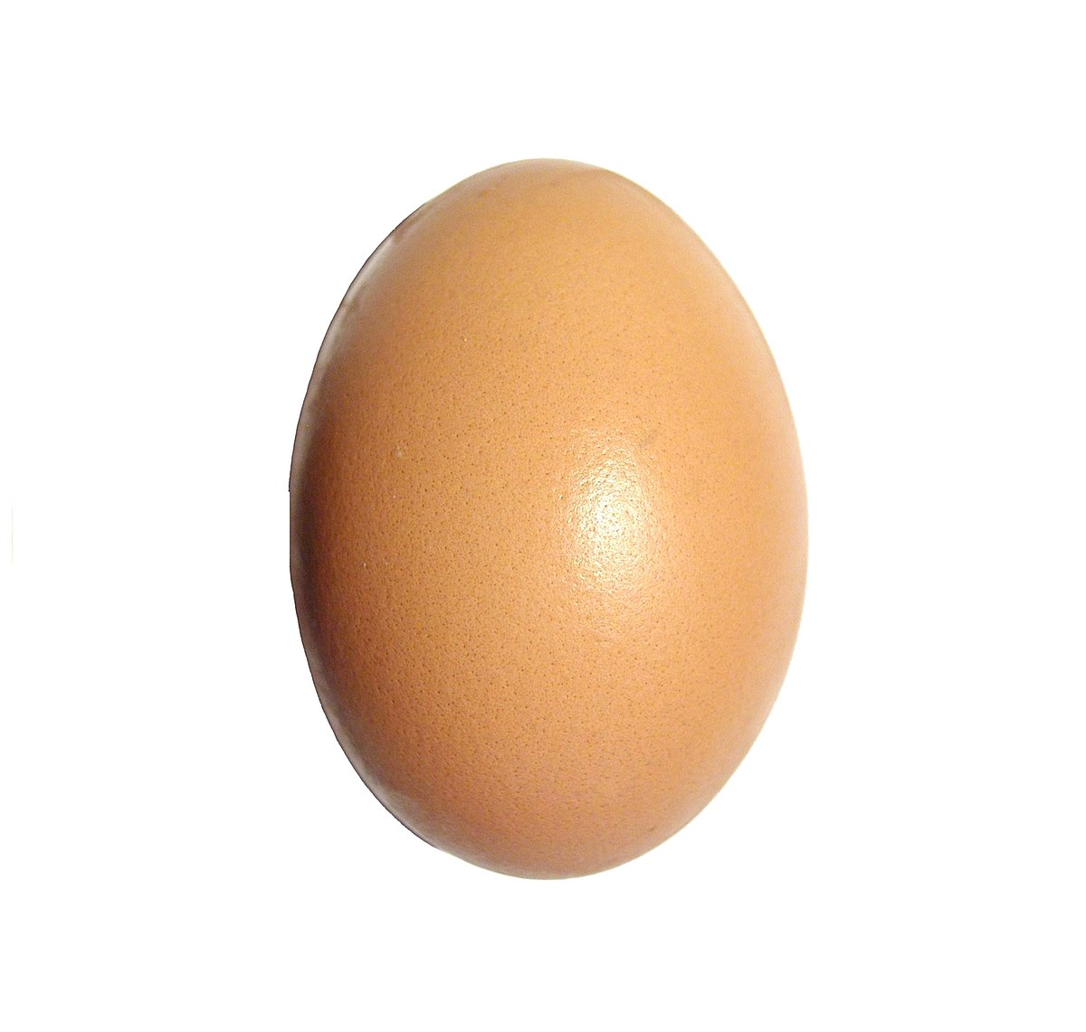 Instagram egg  Wikipedia