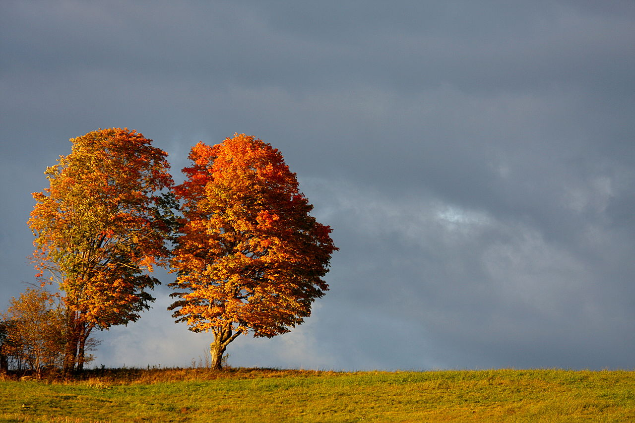 Free Fall Pictures For Wallpaper File Trees In A Field Fall In Canada Jpg Wikimedia Commons