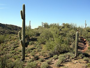English: Sonoran Desert outside Wickenburg, Ar...