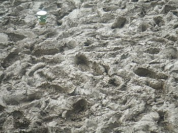 English: Glastonbury festival 2007 THE MUD!!!!!!!!