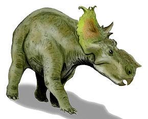 Pachyrhinosaurus Wikipdia