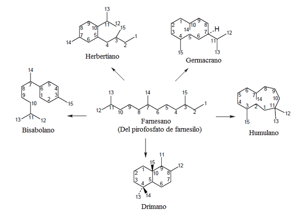 Biosíntesis de sesquiterpenos monociclicos.png