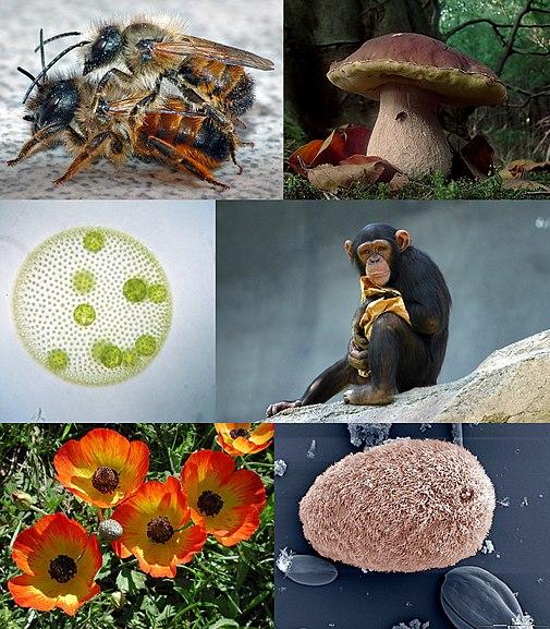 Eukaryota diversity 2, by Vojtech.dostal