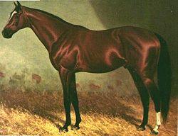 Carbine horse  Wikipedia