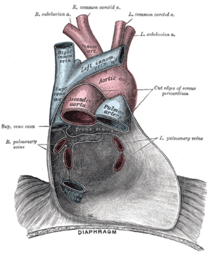 Posterior wall of the pericardial sac.
