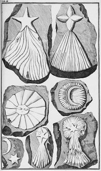 Lithographiae Wirceburgensis 1726 Tafel 03