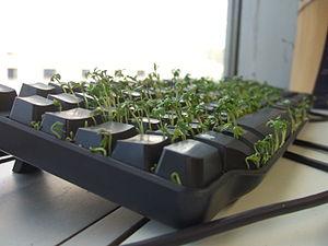 Cress growing in a keyboard.
