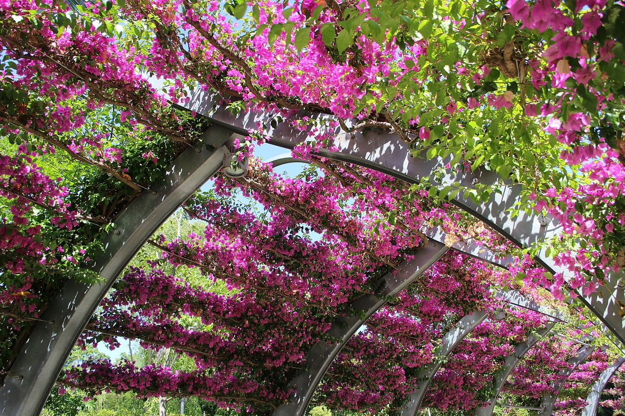 FileThe flowers path Southbank BrisbaneJPG  Wikimedia