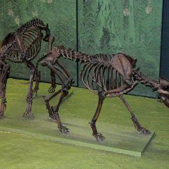 Wolf Skeleton Diagram 3 Phase Motor Wiring Star Delta Canis Dirus  Wikipédia