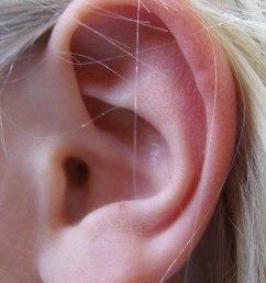 ear diagram encyclopedium [ 1200 x 1722 Pixel ]