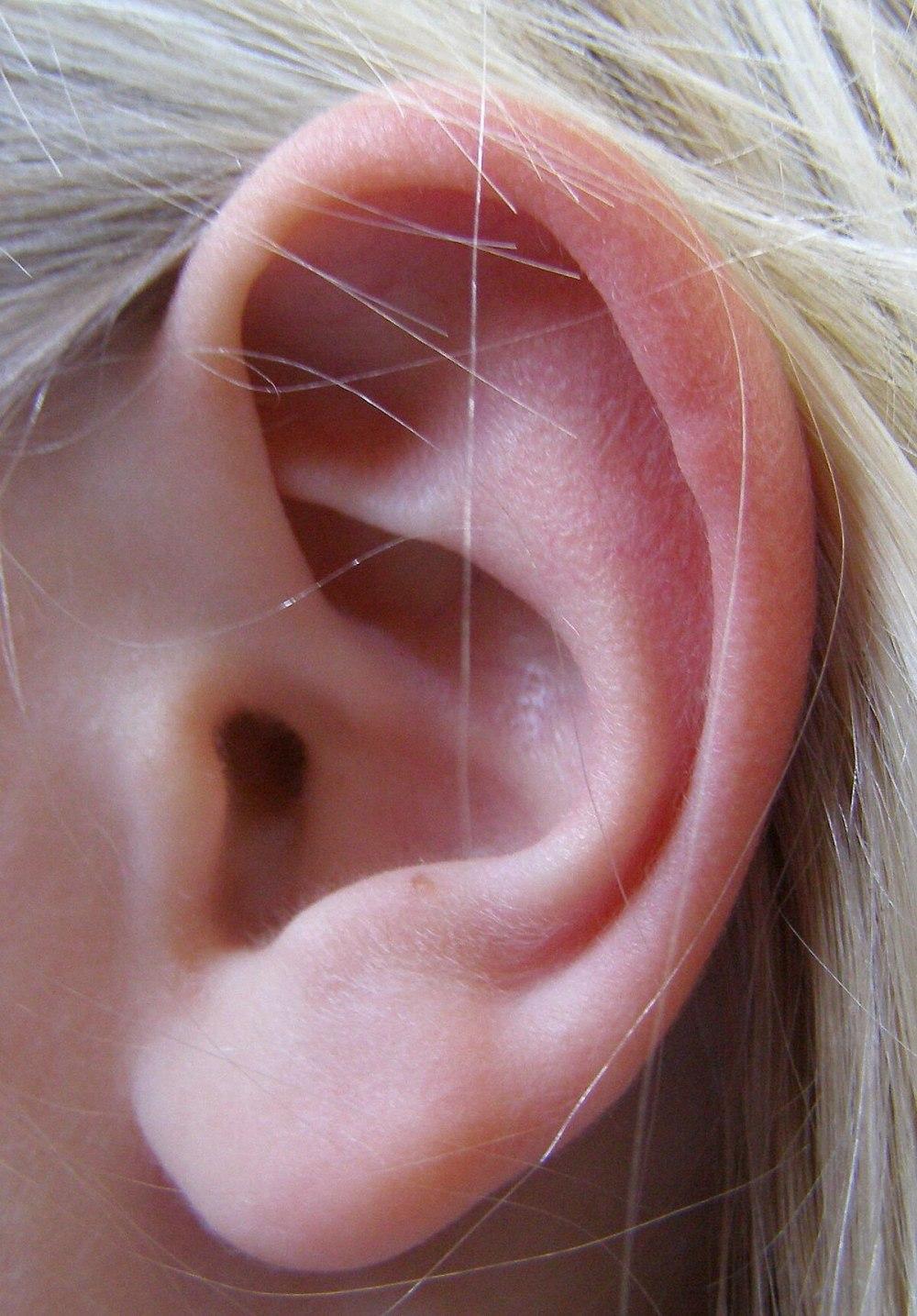 medium resolution of ear diagram encyclopedium