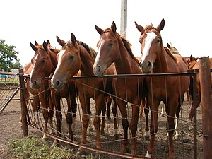 These young horses, though all the same color,...