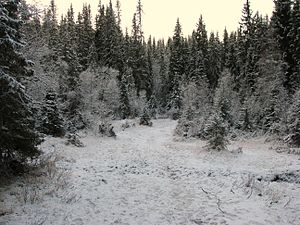 Norwegian boreal forest in early winter. At so...