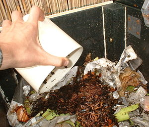 English: Composting-worms just added to a fres...
