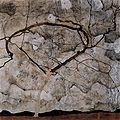 Egon Schiele 027.jpg