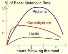 Metabolic Rate Simple English Wikipedia The Free