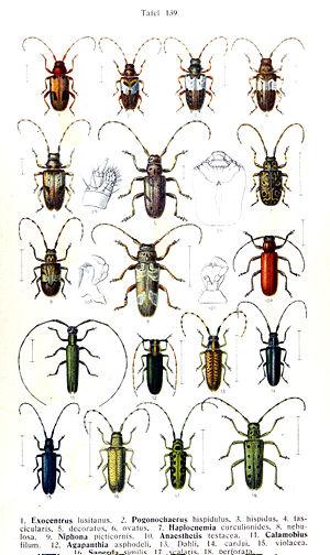 Die Käfer des Deutschen Reiches (FAUNA GERMANI...